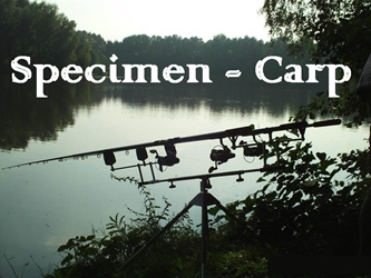 Picture for category Speciment (Carp)